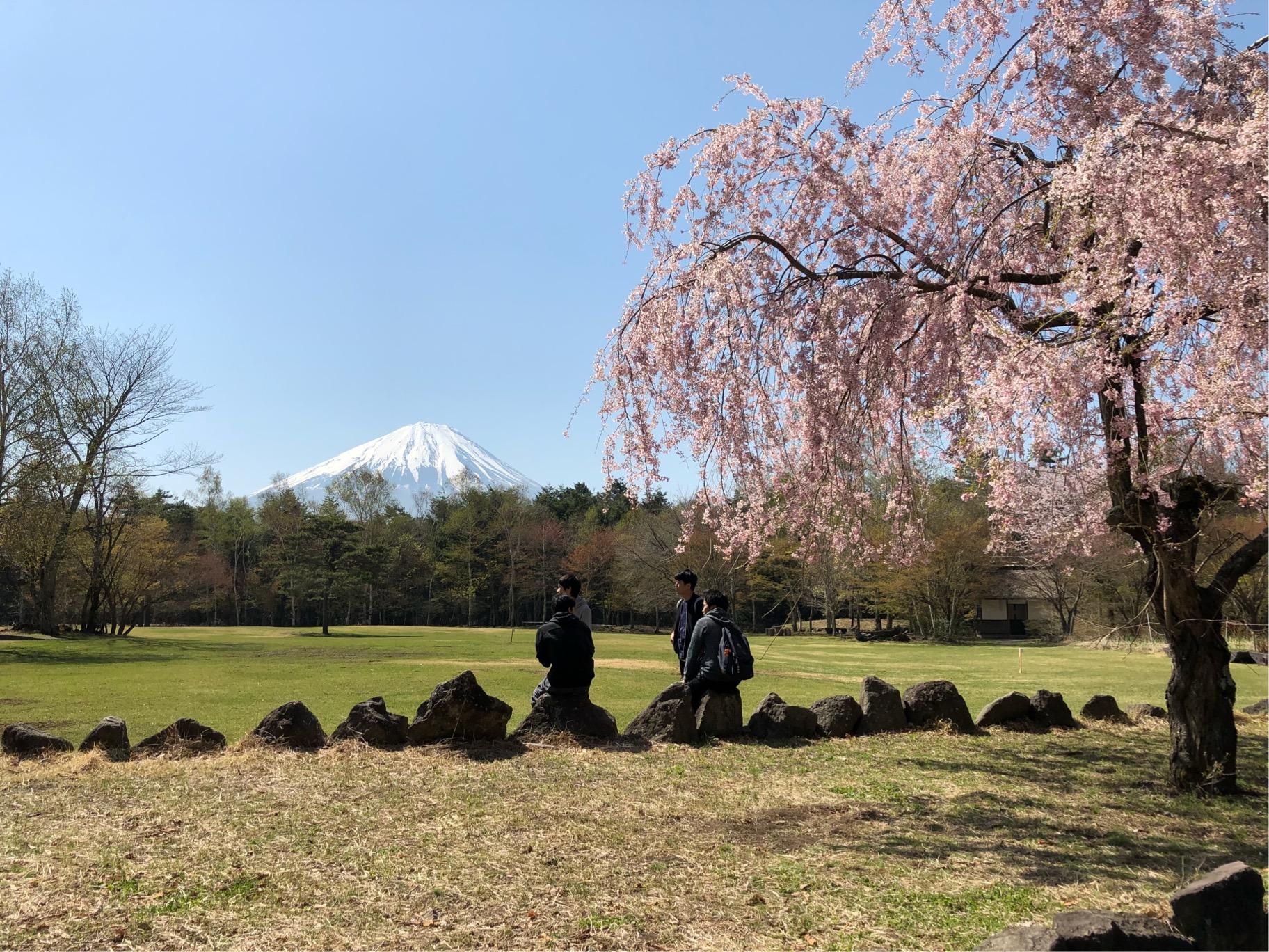 野鳥の森公園から望む富士